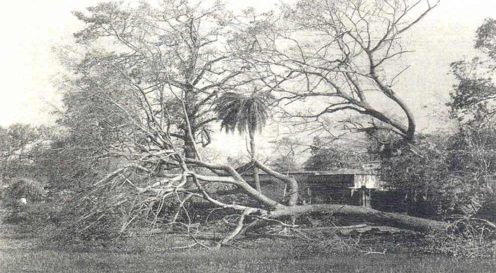 The destruction caused by the 1999 Ersama cyclone