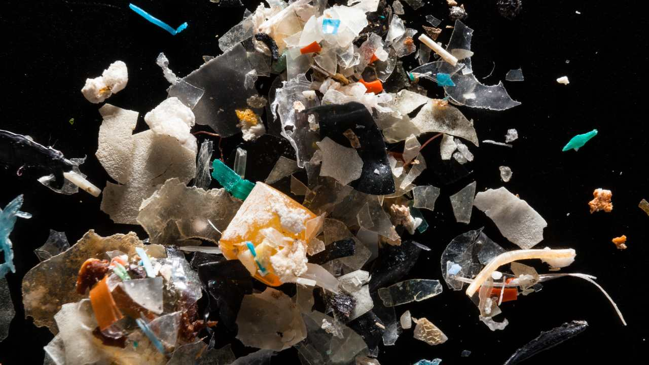 Microplastics from the Rhode River are pictured at the laboratory of Dr. Lance Yonkos in the Department of Environmental Science & Technology at the University of Maryland. Image credit: Flickr/Chesapeake Bay Program